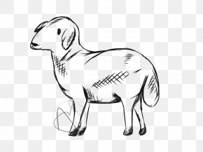 Sheep - Sheep Goat Cattle Drawing Line Art PNG