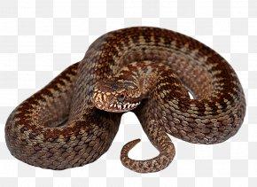 Snake - Snake Reptile PNG