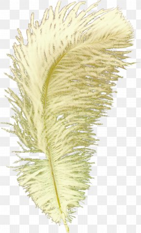 Feather Pictures - Feather Bird Goose Quill PNG