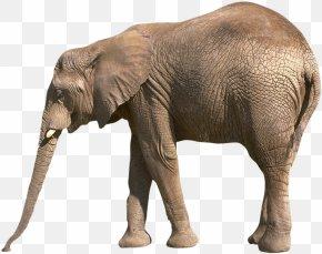 Elephant - Worksheet Reading Comprehension Letter Elephant Homework PNG