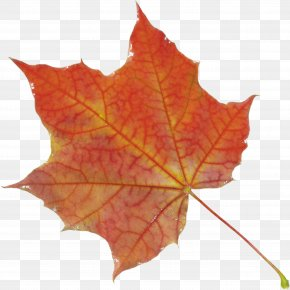 Autumn Leaf - Autumn Leaves Autumn Leaf Color PNG