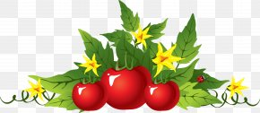 Picture Tomato Image - Garden Tool Gardening Spade PNG