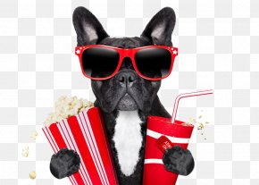 Creative Cinema Dog - Pug Film Corn Dog Stock Photography PNG
