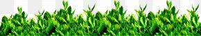 Green Tea - Green Tea Tea Garden Download PNG