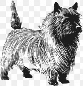 Cairn Cliparts - Cairn Terrier Rat Terrier Toto Clip Art PNG