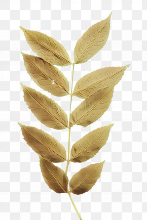 Flowering Plant Tree - Leaf Plant Flower Tree Flowering Plant PNG