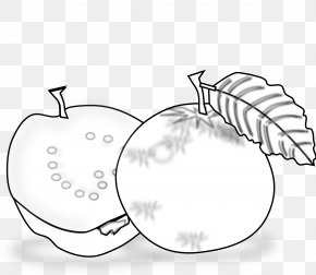 Inkscape Images - Black And White Guava Drawing Clip Art PNG