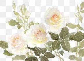 White Flowers - Garden Roses Centifolia Roses Flower White PNG