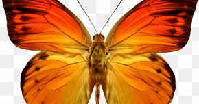 Triple H - Butterfly Insect Clip Art Image Borboleta PNG