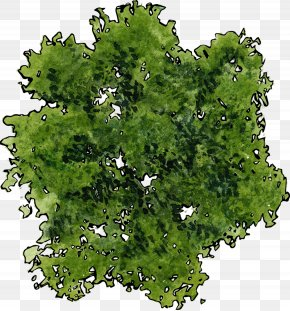 A Top View Of A Green Tree - Tree PNG