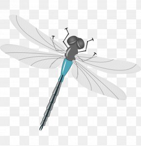 Vector Cartoon Dragonfly Fly Gray Painted - Mosquito Insect Dragonfly Illustration PNG