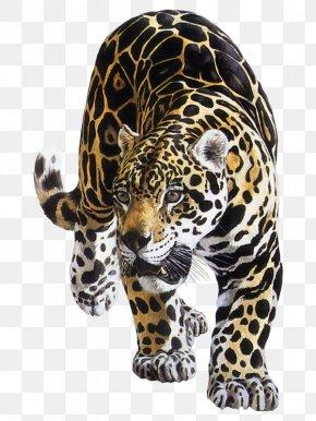 Jaguar Animal - Jaguar Leopard Tiger Felidae Lion PNG