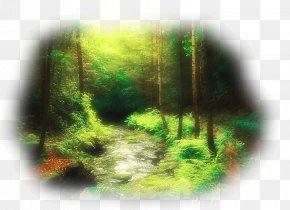 Forest - Forest Tree Desktop Wallpaper PNG