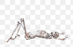 Lying Skull Skeleton - Skull Human Skeleton Bone Body PNG
