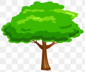 Green Tree Image - Tree Clip Art PNG