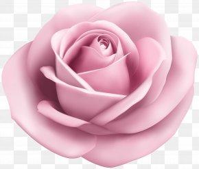 Rose Soft Pink Transparent Clip Art Image - Beach Rose Clip Art PNG