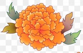 Design - Floral Design Petal Chrysanthemum Pot Marigold PNG