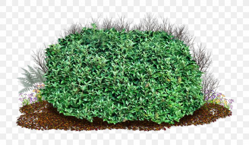 Shrub Clip Art, PNG, 1024x597px, Shrubs Trees, Flowerpot, Garden, Grass, Groundcover Download Free