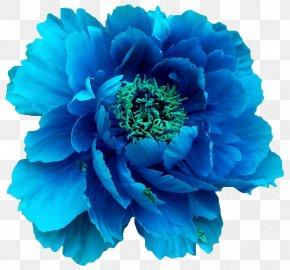 Blue Flower - Moutan Peony Blue Flower Clip Art PNG