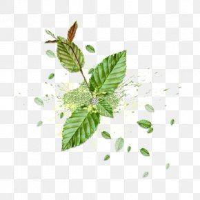 Leaf - Leaf Reinigungswasser Green U6d17u8138 PNG
