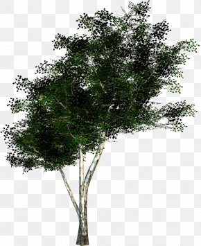 Pistache - Tree Texture Mapping Twig Wavefront .obj File PNG