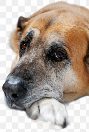Rescue Dog - Dog Breed Pet Cat Black Mouth Cur Veterinarian PNG