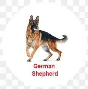 Golden Chrysanthemum - German Shepherd Pit Bull Puppy Dog Breed Pet PNG