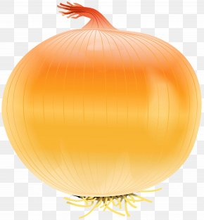 Onion Free Clip Art Image - Yellow Onion Vegetable Calabaza Clip Art PNG
