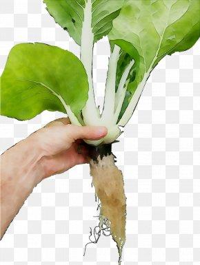Chard Spring Greens Leaf Radish PNG