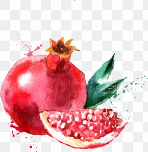 Red Pomegranate - Watercolor Painting Drawing Fruit Illustration PNG
