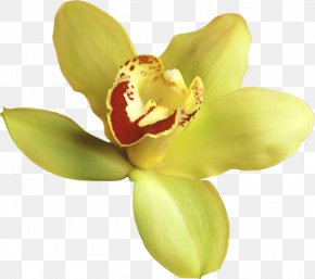 Transparent Yellow Orchid Clipart - Orchids Yellow Clip Art PNG