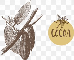 Fruit Of The Cacao Tree Vector Illustration - Fruit Cocoa Bean Euclidean Vector Theobroma Cacao PNG