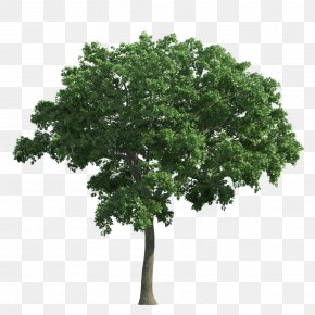 Trees - Decision Tree Learning Landscape Overfitting PNG