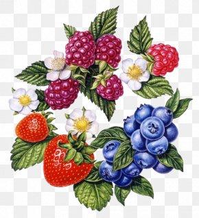 Renaissance Style Berries Combination - Frutti Di Bosco Strawberry Painting Art Illustration PNG