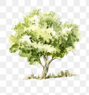Trees - Drawing Watercolor Painting Tree Pencil Sketch PNG