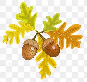 Acorn Image - Acorn Autumn Clip Art PNG