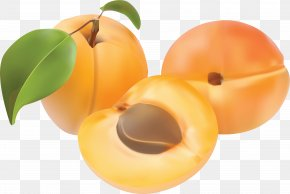 Peach Image - Peach Apricot Clip Art PNG