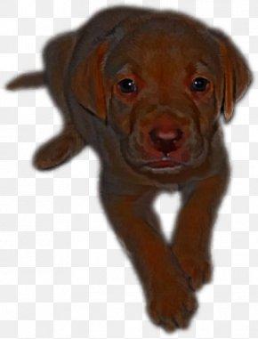 Brown Dog - Labrador Retriever Puppy Dog Breed Companion Dog Dog Collar PNG