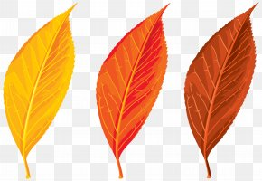 Autumn Leaves Set Clipart Image - Autumn Leaf Color Clip Art PNG