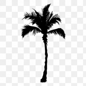 Tree - Arecaceae Tree Date Palm PNG