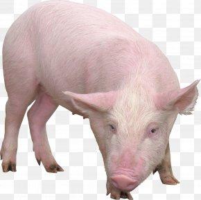 Pig - Domestic Pig Desktop Wallpaper Clip Art PNG