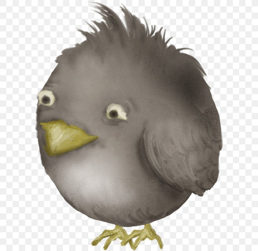 Angry Birds, PNG, 598x800px, Bird, Angry Birds, Beak, Bird Of Prey, Chicken Download Free