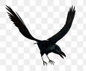 Bird - Bird Crows Download PNG
