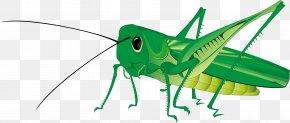 Grasshopper - Grasshopper Royalty-free Clip Art PNG