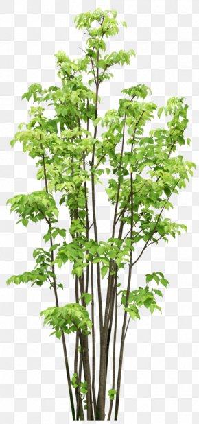 Trees - Tree Garden Branch Clip Art PNG