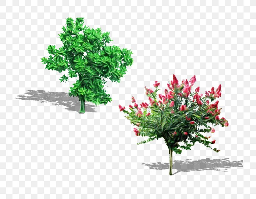 Plant Flower Tree Grass Flowering Plant, PNG, 736x637px, Watercolor, Branch, Flower, Flowering Plant, Grass Download Free