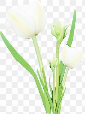 Artificial Flower Arum Family - Watercolor Pink Flowers PNG