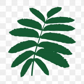 Young Leaves - Leaf November 2017 Combined Defence Services Examination Heart Of England Forest Tree Plant Stem PNG