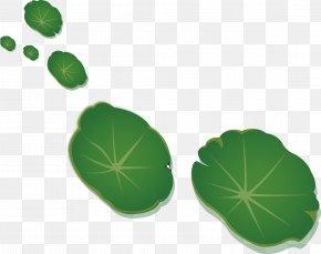 Green Lotus Leaf - Leaf Nelumbo Nucifera Lotus Effect PNG