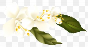 Spring Branch Clipart Element Picture - Clip Art PNG